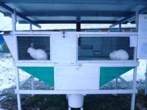 Разведение кроликов как бизнес: преимущества и возможности